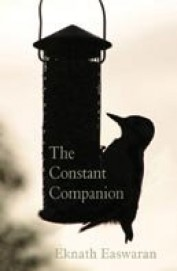 Constant Companion