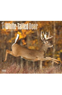 White-Tailed Deer 18-Month Calendar