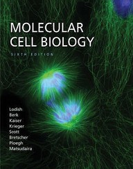 Molecular Cell Biology 6e, 6th Edition