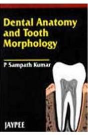 Dental Anatomy & Tooth Morphology